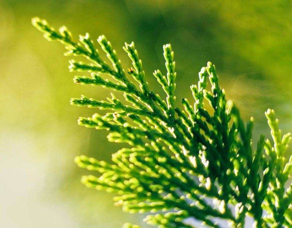 Szkółka drzew i krzewów ozdobnych
